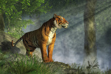 A Tiger Stands On Boulders In ...