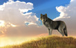 A gray wolf stands in long golden grass watching the sunrise. The animal looks back at you with a curious expression. 3D Rendering