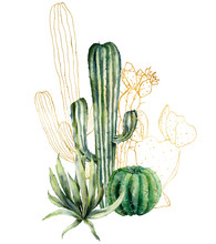 Watercolor Cacti Card With Line Art Print. Hand Painted Floral Collection With Desert Cacti, Agava. Botanical Illustration Isolated On White Background For Design, Print, Fabric Or Background.