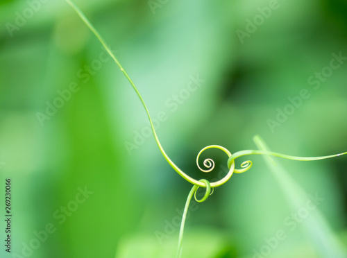 Photo  Abstract leaf  spiral close-up  in a blurred background
