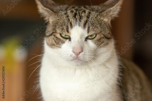 Böse kann die Katze schauen Canvas Print