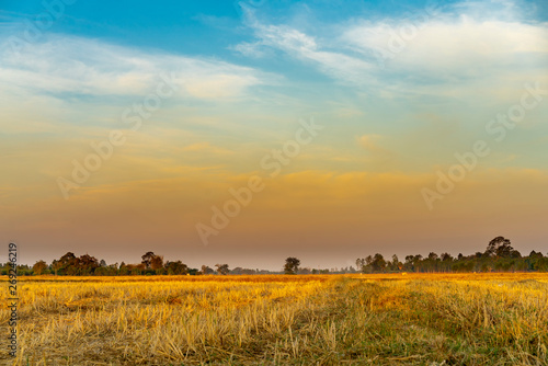 Fotobehang Cultuur Golden beautiful Sunrise and clear at dry grass fields in the countryside at morning
