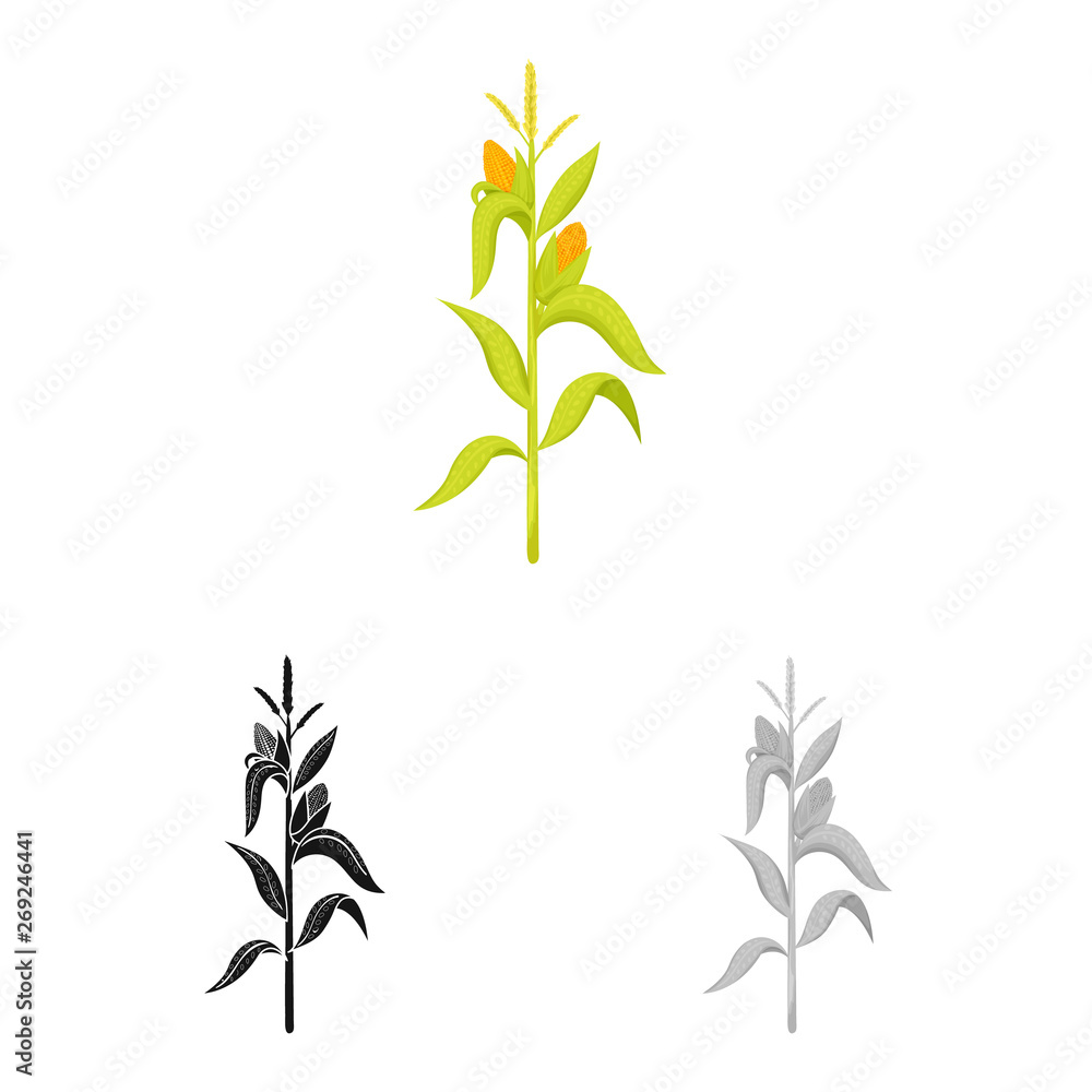 Fototapety, obrazy: Vector design of corn and stalk logo. Collection of corn and field stock symbol for web.