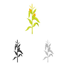 Vector Design Of Corn And Stal...