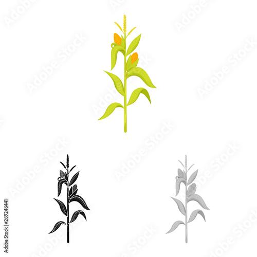 Fotografia  Vector design of corn and stalk logo