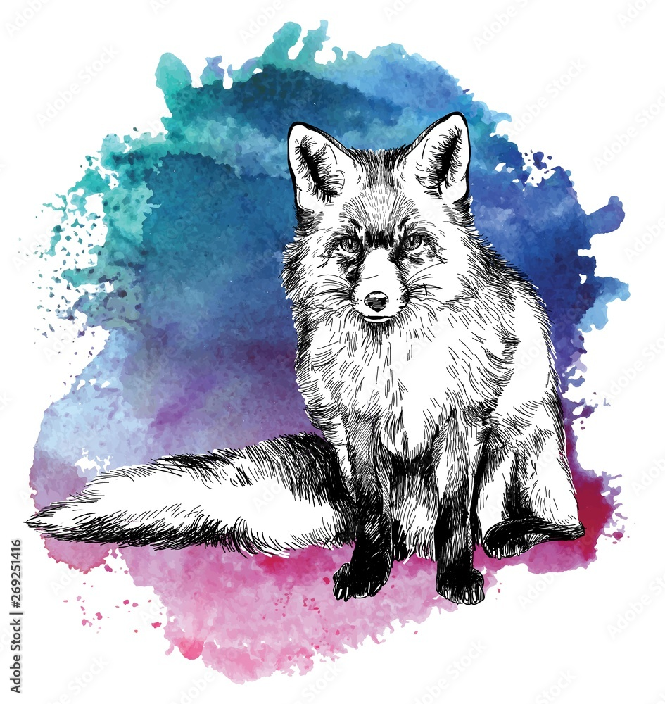 Fox. Professional drawing in vintage style. Cute fluffy fox. Arctic fox in winter coat. Freehand drawing. Ink drawing, drawing pen. Texture watercolor paint. <span>plik: #269251416 | autor: RantGoil</span>