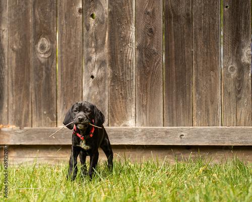 Vászonkép  playfull puppy