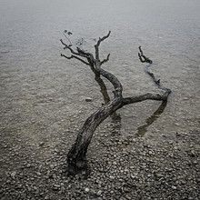 Big Fallen Branch Lying In The Shallow Water Of Lake Ammersee