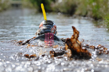 A Competitor Splashes Muddy Br...