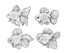 Sketch Of Gold Fish. Outline W...
