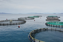 Fish Farming Nets And Cage In ...