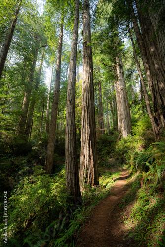 Stickers pour portes Route dans la forêt Redwoods Trail