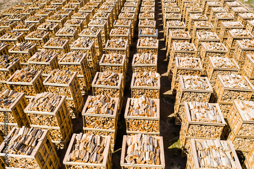 Slika na platnu Rows of firewood stacked on pallets seen from above