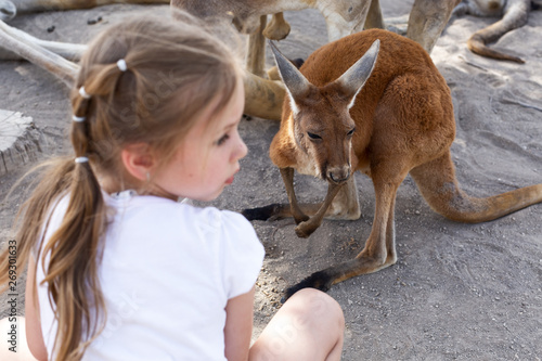 Photo sur Toile Kangaroo cute little girl and a kangaroo at an australian zoo in israel