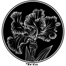 Round Print With A Large Iris ...