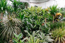 Many Different High Plants In Flower Pots In Flowers Store. Garden Center And Wholesale Supplier Concept. Green Background. Lots Of Leaves.