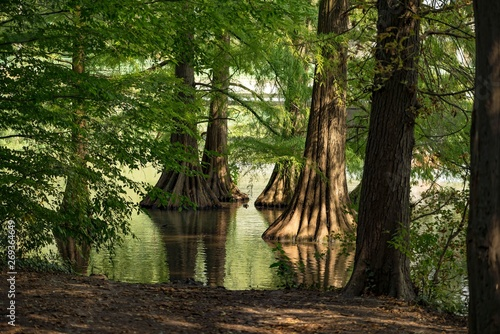 Foto  Great cypress swamp close up in the shadow