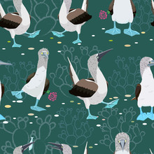 Blue-footed Booby Pattern