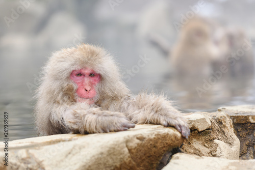 Smiley monkey in onsen, natural hot spring in Nagano, Japan Canvas Print