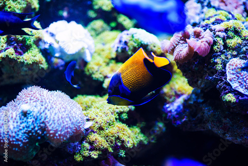 Wonderful and beautiful underwater world with corals and tropical fish Wallpaper Mural