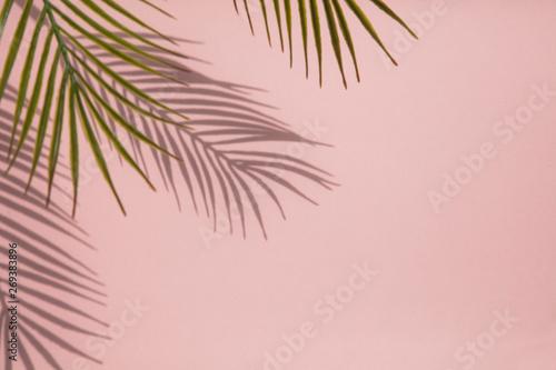 Cuadros en Lienzo Tropical palm tree leaf shadow on a pastel pink background
