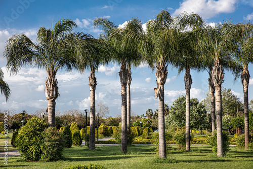 Photo Park with gardens and pine trees located near the Sabanci Central Mosque in a center of Adana city, Turkey