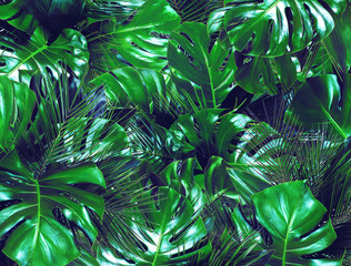 Fototapeta Do Spa Dark green tropical background. Close up of bouquets of various fresh leaves. Design template. Top view, flat lay