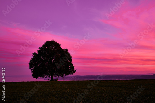 Fotobehang Roze Silhouette tree on field against romantic sky at sunset