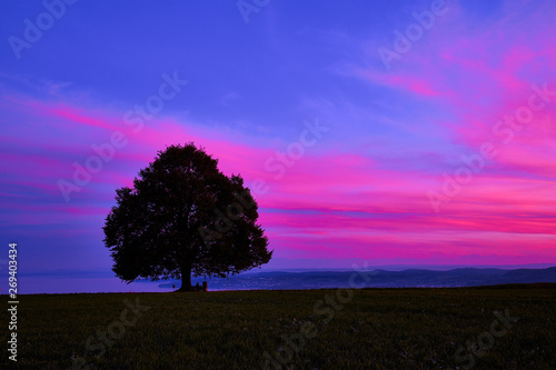 Photo sur Toile Rose Tree on field against sky during sunset