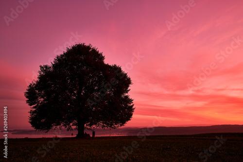 Photo sur Toile Rose Silhouette tree on field against orange sky