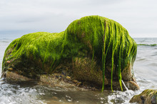 Rock Covered In Green Algae And Seaweed, At Low Tide, On The Irish East Coast Seashore.