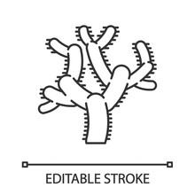 Teddy Bear Cholla Cactus Linear Icon