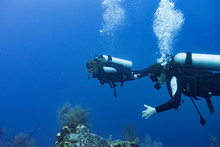 Scuba Divers Underwater With A...