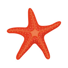 Red Starfish In Cartoon Style ...
