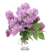 Bouquet Of Lilacs In A Glass V...