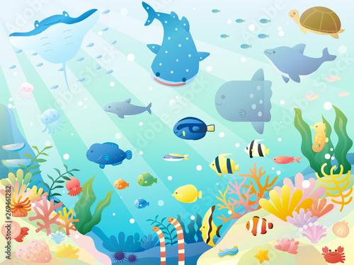 海の生き物3