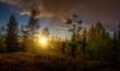 Kleines Panorama eins Waldes bei Sonnenuntergang