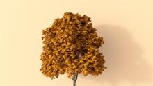 D Rendering, Autumnal Tree