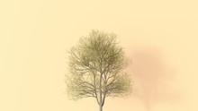 D Rendering, Single Bare Tree On Yellow Background