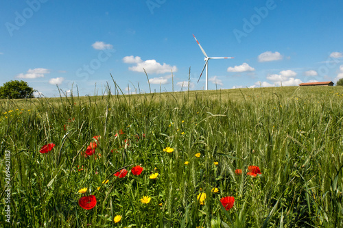 Valokuva  Campo di grano con pala eolica