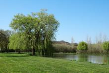 Grand Arbre à L'étang Du Roy à Montreuil Bonnin
