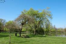 Saule Pleureur à L'étang Du Roy De Montreuil Bonnin