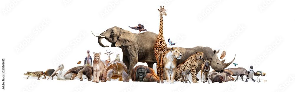 Fototapeta Wild Zoo Animals on White Web Banner