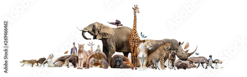 Fotografie, Obraz Wild Zoo Animals on White Web Banner