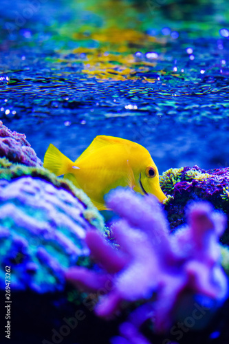 Foto op Plexiglas Donkerblauw Wonderful and beautiful underwater world with corals and tropical fish.