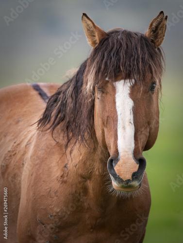 Wild horse photos