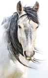 Wild horse photos - 269475805