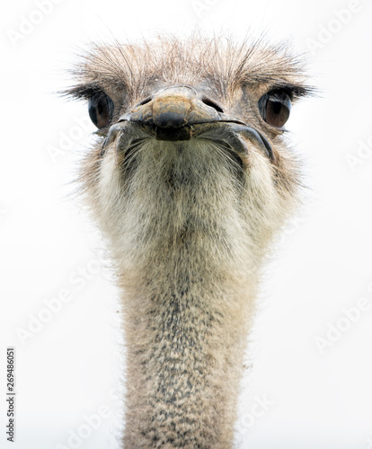 Fotobehang Struisvogel An ostrich head closeup front on showing its large eyes and beak.