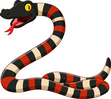 Cartoon Coral Snake On White Background