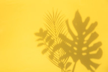 Bright Summertime Trendy Tropical Leaf Shadows On A Yellow Background